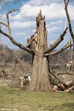 split-tree329A0298