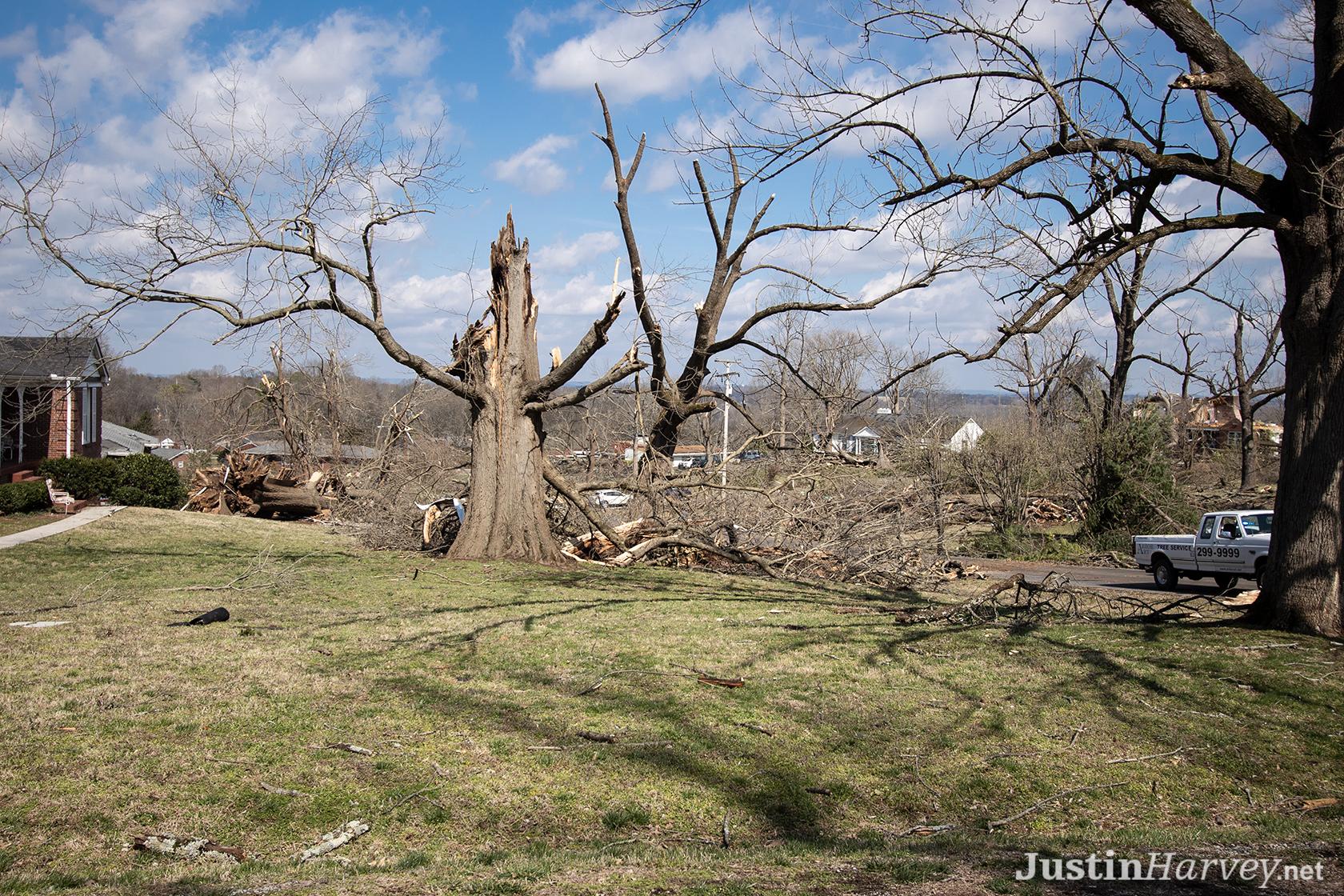 tree-cut-in-half329A0241