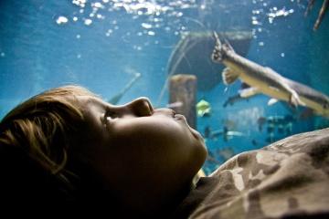 selah-aquarium_8643