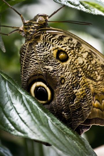 butterfly_0576