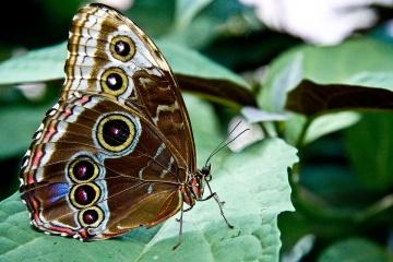butterfly_8673